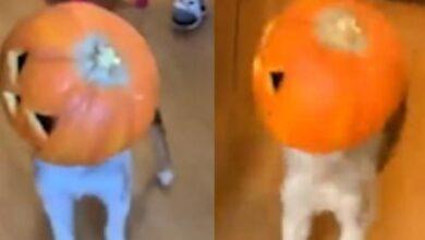"""صورة بالفيديو.. احتفال غريب لكلب بـ""""عيد الهلع"""""""